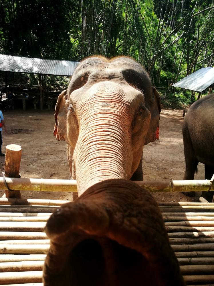 Travel Guide Chiang Mai Thailand Elephant Sanctuary