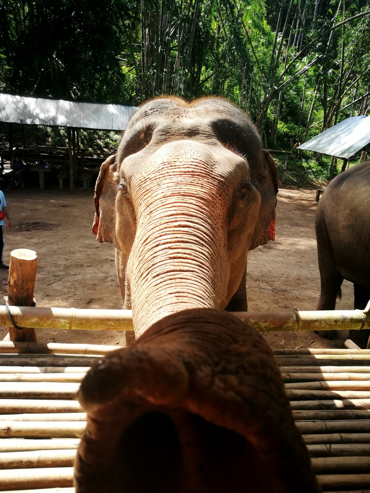 Travel Guide Chiang Mai Thailand Elephant Sanctuary