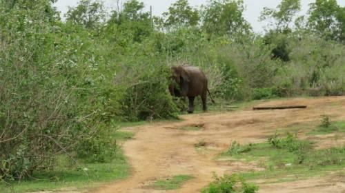 Sri Lanka Udawalawe National Park Safari Elephant