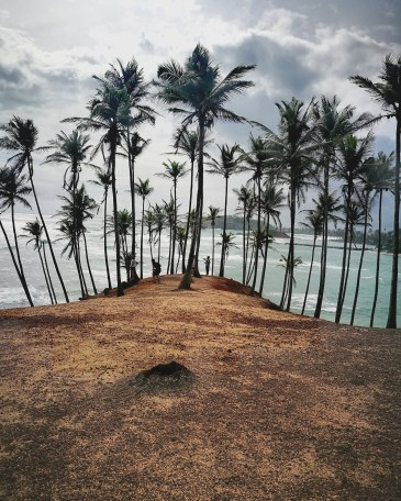 Backpacking Sri Lanka Mirissa Beach Coconut Tree Hill Palm Tree Hill