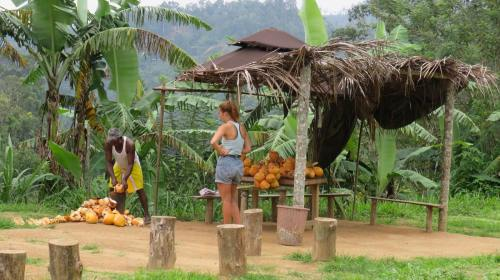 Travel guide to Sri Lanka Ella Town Nine Arch Bridge Fresh Coconut